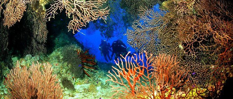 Ilhas Cayman estão entre os melhores destinos de mergulho do mundo 1