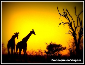 Girafas Embarque na Viagem