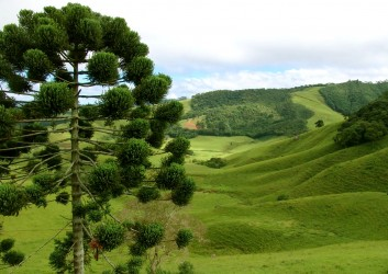 Monte verde natureza