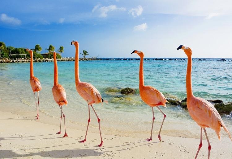 5 razões pra você viajar para Aruba  fronteiras