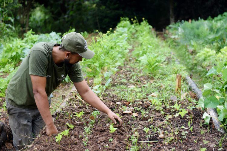 ecologia e sustentabilidade