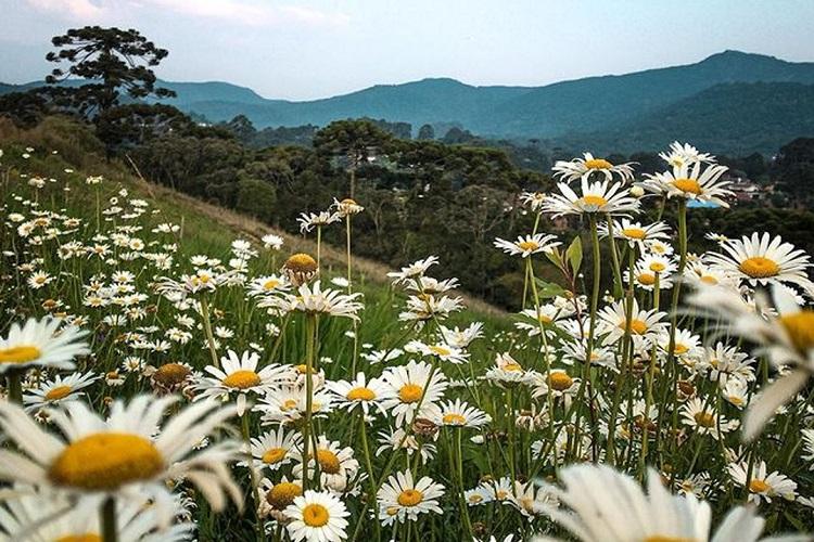 Monte Verde na primavera