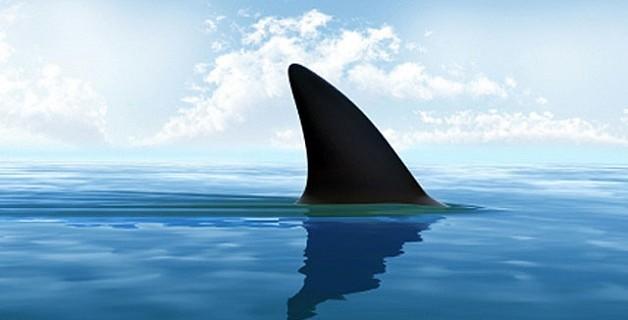 Rede hoteleira retira de seus cardápios a barbatana de tubarão 1