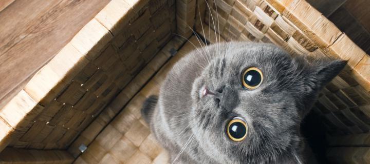 Aqui há gato - novo espaço para cat lovers em Lisboa 6